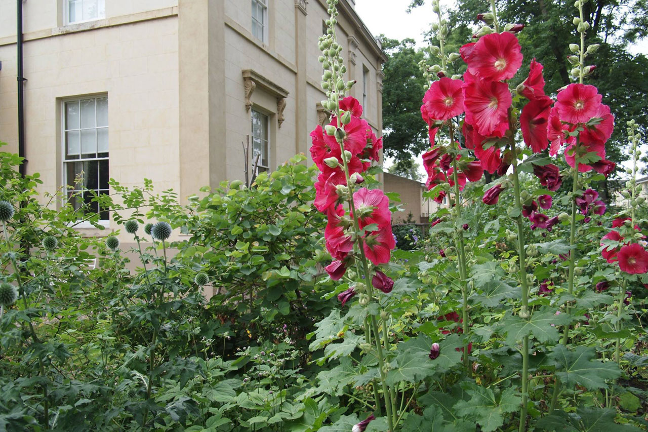 Red flowers in front of Elizabeth Gaskell's House.